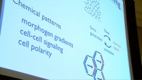 Sunday Symposium - Force Generation in Cell & Tissue Networks